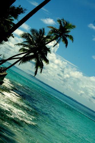 maldive (263 clic)