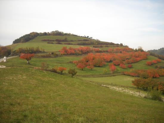 La Ferareta - Tregnago (2424 clic)