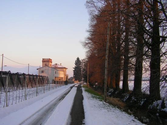 Viale alberato con villa - Zevio (3211 clic)