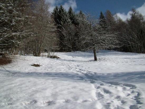 la neve.....che bella!!!! - Pejo (2812 clic)