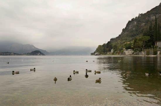 vista da Rivabianca - Lierna (2723 clic)