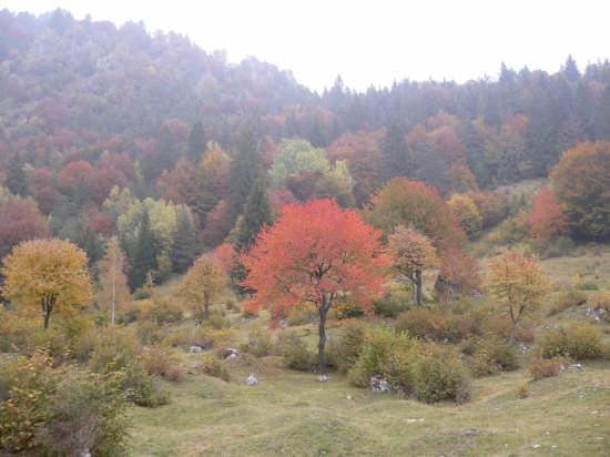 i colori dell'autunno - Bezzecca (2821 clic)