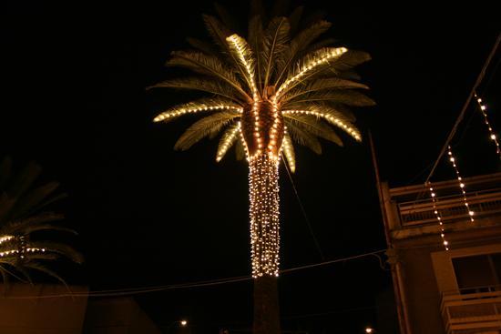 Palma di Natale - Castellana sicula (4386 clic)