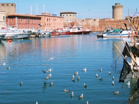 Gabbiani - Livorno (1414 clic)