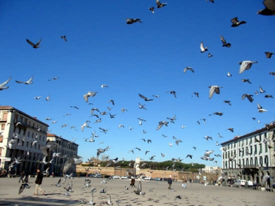 Piccioni - Livorno (3587 clic)