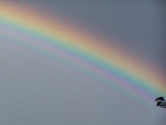 ...colori - Augusta (2752 clic)