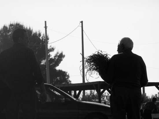...asparagi.. a cavagrande,laghetti di cassibile-avola - Augusta (3490 clic)