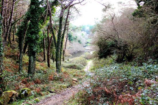 Gorgo Lungo all' interno del Bosco del Cappelliere... - Godrano (2523 clic)