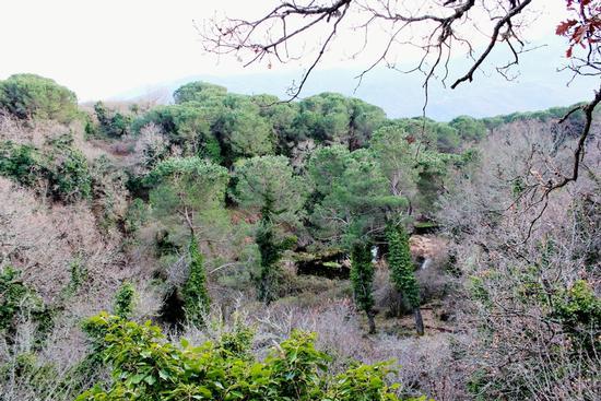 Gorgo Lungo immerso nell'incantevole flora del Bosco di Ficuzza... (3181 clic)