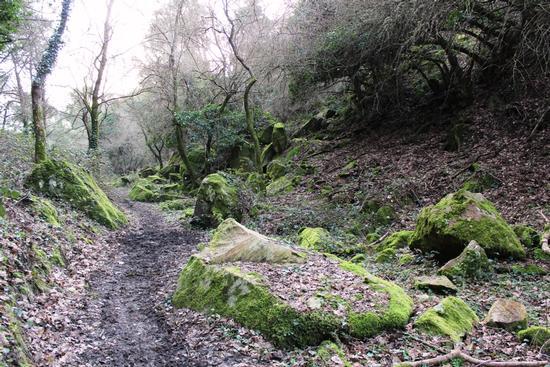 Muschi e licheni all'interno del bosco di Ficuzza... - Godrano (3503 clic)