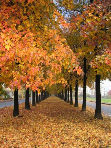 autunno.viale di vercelli  (4266 clic)