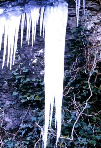 Inverno 1979 -  Ghiaccioli - Nemi (1415 clic)