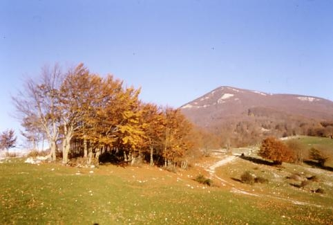 Colori d'Autunno - Nemi (2295 clic)