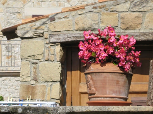 Vaso di begonie - Mistretta (3152 clic)