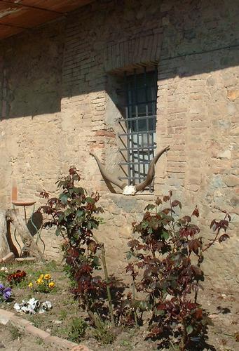La Finestra - Trequanda (1434 clic)