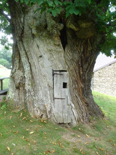 l'albero delle favole - Savona (2400 clic)