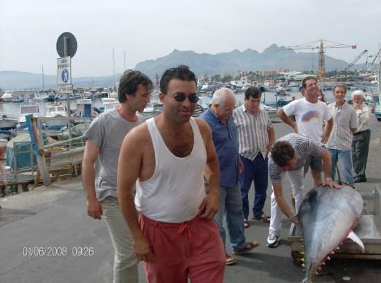 tonno - Porticello (2955 clic)