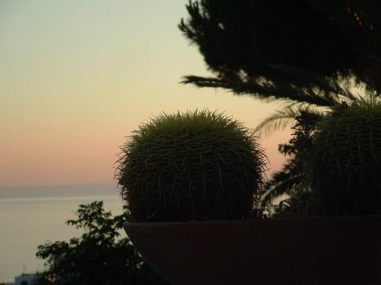 cactus - Ischia (2397 clic)