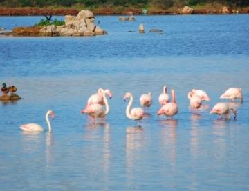 laguna di Olbia (3455 clic)