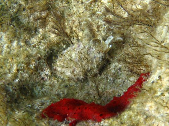 Isola dei Conigli - Lampedusa (3340 clic)