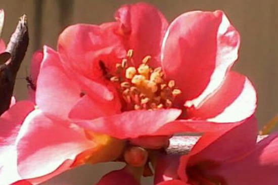 fiore...un particolare.. - Sieci (1610 clic)