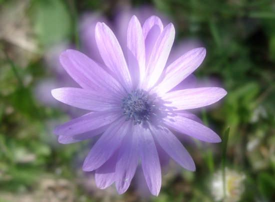 Fiore (particolare) - Sieci (2716 clic)