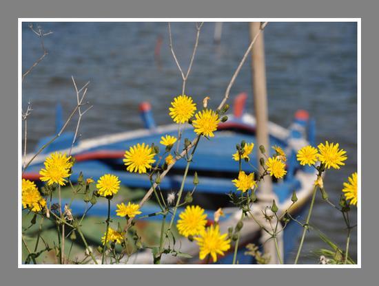 In riva al lago - Ganzirri (3217 clic)