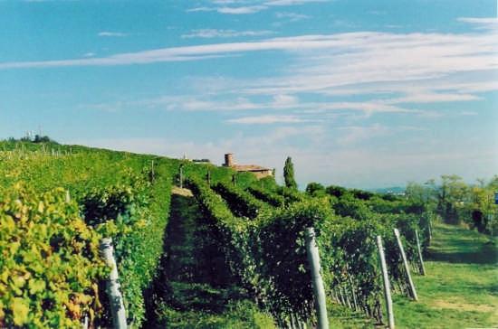 Barolo, Castello della Volta (2625 clic)
