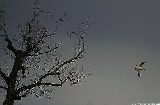 ..il volo del gabbiano.. - Marina di massa (1325 clic)