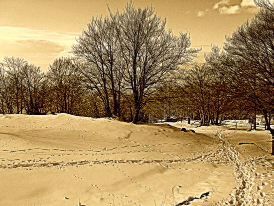 ..quanta neve a campocecina.. - Alpi apuane (1375 clic)