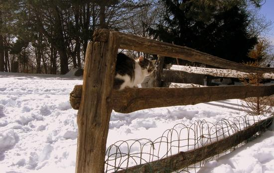 ..quanta neve a campocecina.. - Alpi apuane (2341 clic)