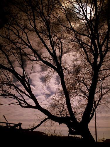 vecchio albero sul ciglio del fiume... - Marina di massa (1496 clic)
