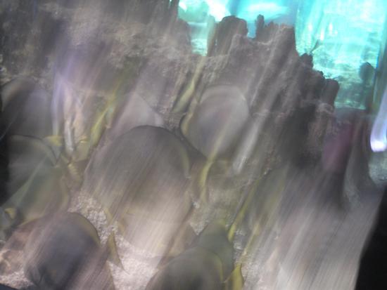acquario di genova - GENOVA - inserita il 01-Feb-11