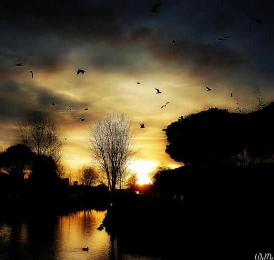 ..gabbiani al tramonto.. - MARINA DI MASSA - inserita il 10-Feb-14