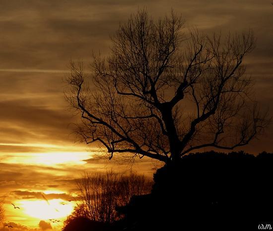 tramonto sul brugiano.. - Marina di massa (1409 clic)