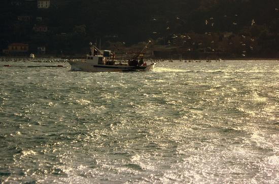 pescatori scortati dai gabbiani... - Portovenere (2070 clic)