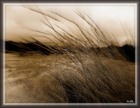 ...dune mosse.. - FORTE DEI MARMI - inserita il 20-Dec-12