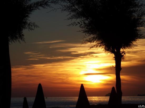 tramonto sui tamerici... - Marina di massa (705 clic)