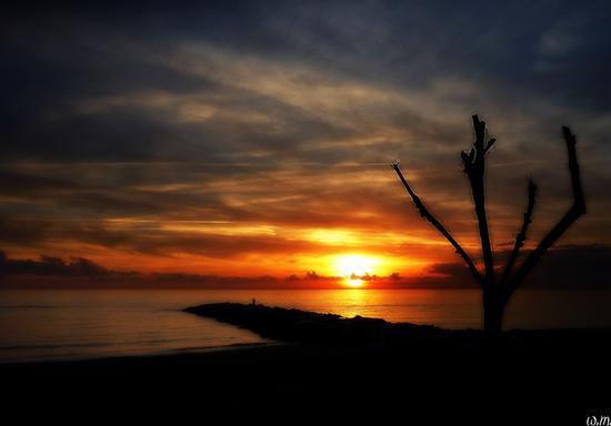 ..tramonto sui tamerici.. - Marina di massa (770 clic)