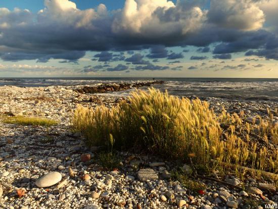 spiaggia libera colonia torino.... - Marina di massa (967 clic)