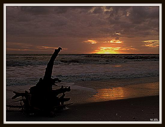 radice d'albero portata dal mare... - Marina di massa (832 clic)