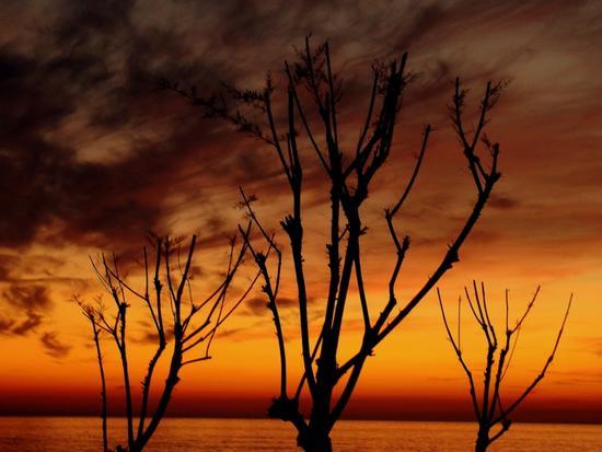 ..cala il sole sul mare... - Marina di massa (2009 clic)