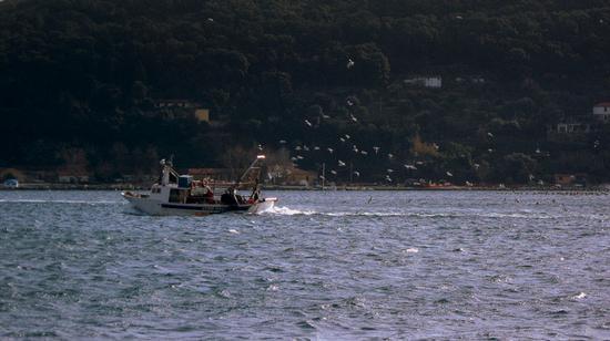 pescatori scortati dai gabbiani.. - Portovenere (2599 clic)
