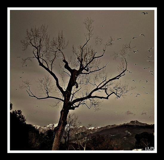 l'albero dei gabbiani... - Marina di massa (2533 clic)