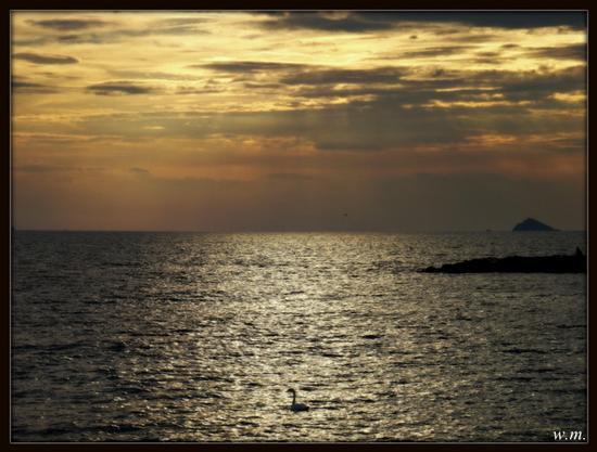 un cigno in mezzo al mar.... - Marina di massa (2726 clic)