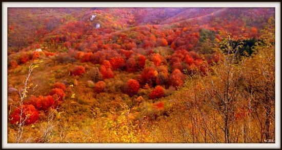 colori d'autunno... - Alpi apuane (1853 clic)