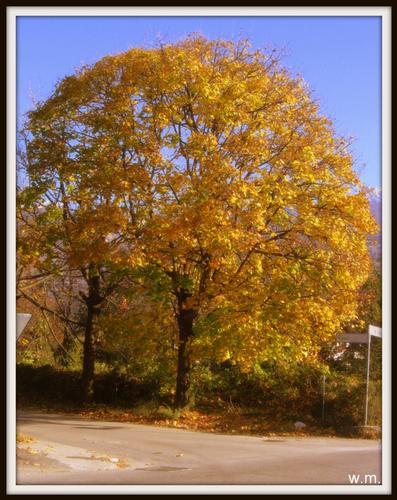 ..colori d'autunno.. - Massa (1314 clic)