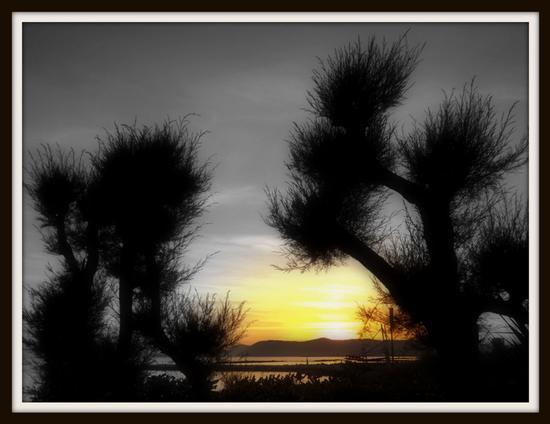 il tramonto sui tamerici.. - Marina di massa (2543 clic)