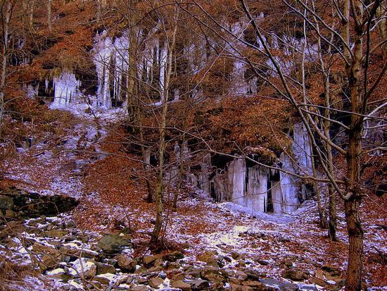 un bosco magico nel parco delle apuane... - Alpi apuane (3167 clic)