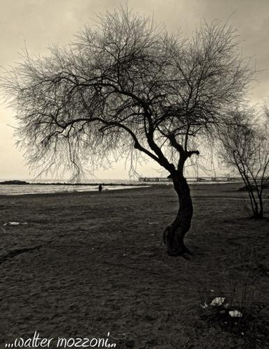 ..tamerici sulla spiaggia... - Marina di massa (401 clic)